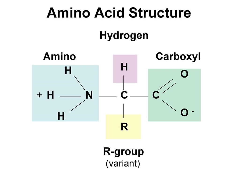 proteins and amino acids discovery of the unicist