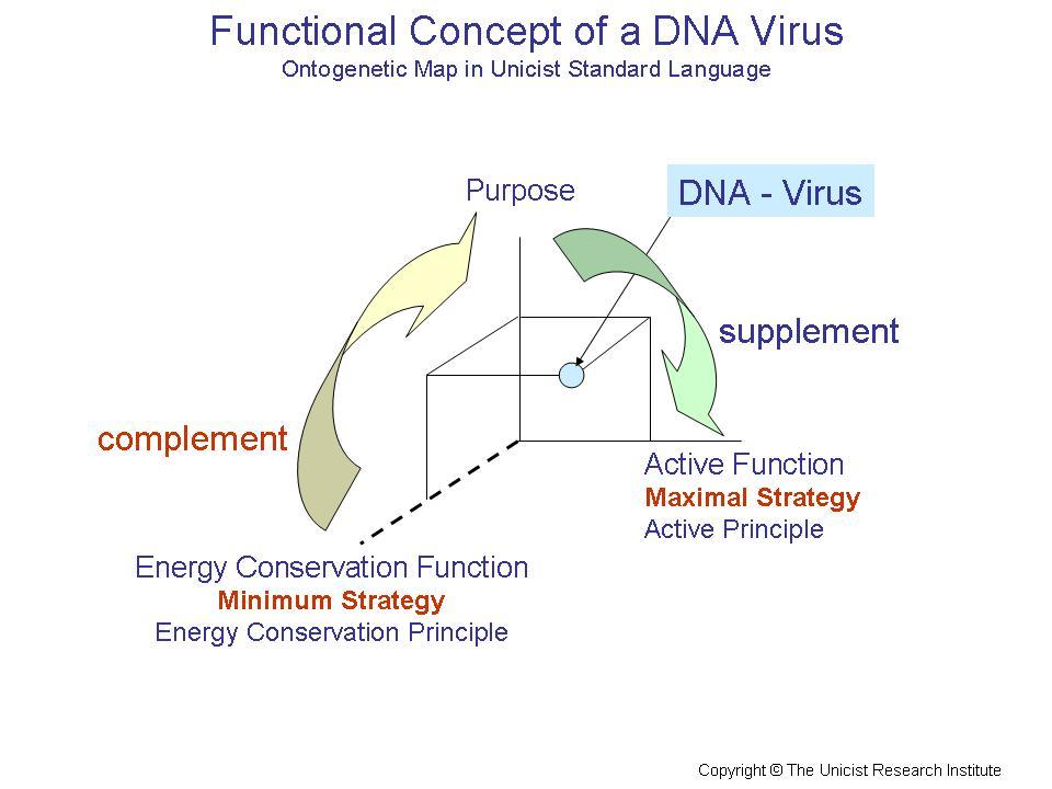 DNA-Viruses